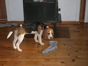 Lucy med sokk